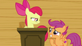 Apple Bloom looking serious at Scootaloo S6E4.png