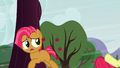 Babs sees Apple Bloom fall S3E08.png