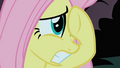 Fluttershy tries to cover her view of the Cockatrice S1E17.png
