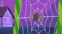 Spider landing on web S2E04
