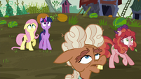 Twilight, Fluttershy, and Hooffields see incoming hay bales S5E23