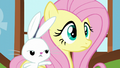 Angel tapping on Fluttershy S5E23.png