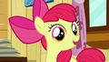 "Apple Bloom ""Yeah"" S6E4.png"
