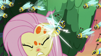 Flash bee stinging Fluttershy's ear S7E20