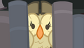 Owlowiscious in the library shelf S4E23.png