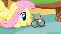 Fluttershy 'There you go Mr Mousy' S1E22