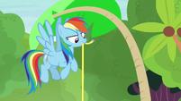 Rainbow Dash measuring the palm tree S7E5