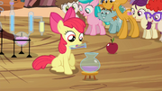 S04E15 Apple Bloom alchemik