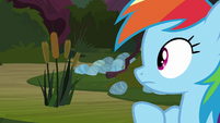 Rainbow notices a patch of cattails S8E17