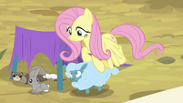 Fluttershy helping showcase animals S9E22