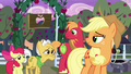 Grand Pear enters Sweet Apple Acres S7E13.png
