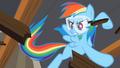 Rainbow Dash Karate Chop S2E3.png