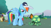 Rainbow Dash looking at Tank 2 S2E07