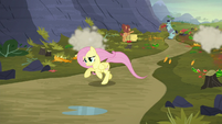 Fluttershy galloping after Twilight S5E23