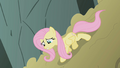 Fluttershy inching down the dirt mound S1E07.png