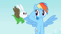 Rainbow Dash staring at Angel-Gummy-Owlowiscious S2E7