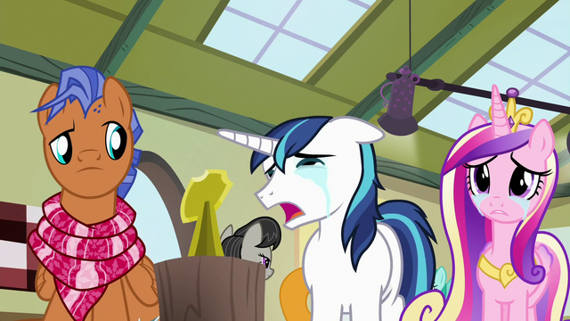 """File:Shining Armor """"it's small like her!"""" S7E3.png"""