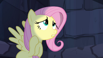 Fluttershy worried about Angel S4E03