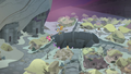 Mane Six and Pillars leaving the Well of Shade S7E26.png