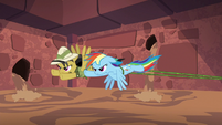 Rainbow and Daring flying and pulling vine S6E13