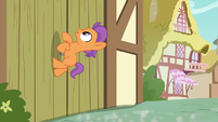 Tender Taps gallops up a wooden door S6E4