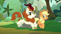 Autumn Blaze prancing alongside AJ S8E23
