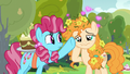 Chiffon Swirl waves her hoof in Pear Butter's face S7E13.png