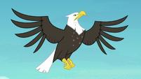 Eagle flying through the sky S8E6