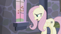"""Fluttershy """"even tweets don't make sense any more!"""" S5E02.png"""
