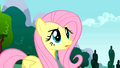 Fluttershy loss of control S01E16.png