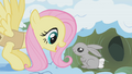 Fluttershy waking up a bunny S01E11.png