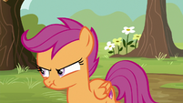 Scootaloo with an angry pout S8E20