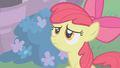 Apple Bloom 'Applejack says these things take time' S01E12.png