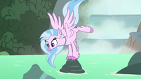 Silverstream jumping on rocks S8E22