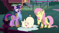 Twilight, Fluttershy, and happy clean pig S5E3