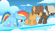 Filly Rainbow Dash ready to race S1E23