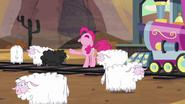 S05E11 Pinkie i owce