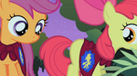 Scootaloo checks for Apple Bloom's arguing cutie mark S1E17