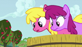 Cherry Berry and Berryshine looks at Apple Bloom S6E4.png