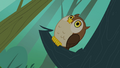 Owl hooting S3E06.png