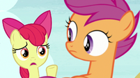 "Apple Bloom ""no, that's crazy!"" S7E8"