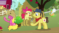 Apple Bloom pours cider for a Sweet Apple Admirer S7E14.png