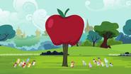 S04E15 Ogromne jabłko wyhodowane przez Apple Bloom