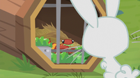 Angel Bunny meeting the little gecko S9E18