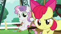 Apple Bloom and Sweetie Belle look at Scootaloo S6E4.png