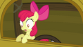 Apple Bloom looks down S3E04.png