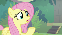 Fluttershy -that sounds serious- S8E4