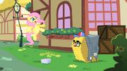 Fluttershy assustada com a fantasia de feno de Pinkie T1E25