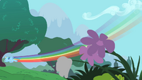 Rainbow Dash flying by some flowers S1E16