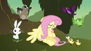 S02E22 Zwierzątka próbują pocieszyć Fluttershy